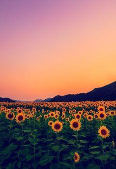 Campo di girasoli nature sunflower fields, wallpaper и beautiful landscapes Beautiful World, Beautiful Places, Beautiful Flowers, Flowers Nature, Beautiful Sky, Beautiful Landscapes, Natur Wallpaper, Wallpaper Desktop, Bedroom Wallpaper