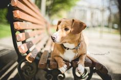 Dog photography by Mariiana Capela  #dog #bruxelles #brussels #belgique #belgium