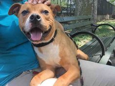BUBBA A1107966 - - Manhattan  TO BE DESTROYED 06/15/17  *PUBLICLY ADOPTABLE -  Click for info & Current Status: http://nycdogs.urgentpodr.org/bubba-a1107966/