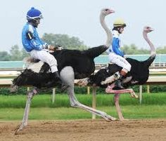 Ever seen ostrich racing? Watch it in action on my latest blog. Unless you don't like amusement. It's hilarious. #ostrich  http://www.badassbutton.com/36a1df123b554284aebac7a399a975d2
