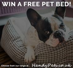 #Win a free Pet Bed! #competition #dogs