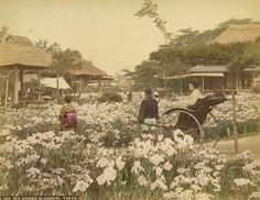 堀切菖蒲園, iris garden in horikiri, tokyo -- 【タイムスリップ】幕末から明治へ「1800年代末の日本」の臨場感あふれる写真たち