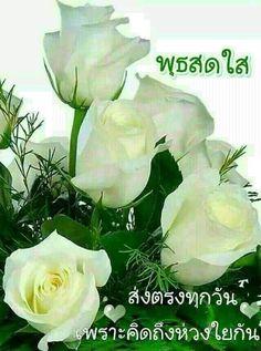 Simple Flower Crown, White Flower Crown, Simple Flowers, Amazing Flowers, Pretty Roses, Beautiful Roses, Peony Flower, My Flower, White Roses