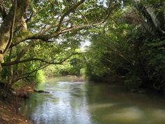 Belize jungle | The Jungles of Belize - LGBT Travel in Belize