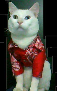 ....Este es un gato muy tierno y engreido de la casa...