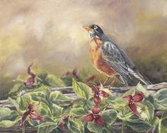 Wake Robin, Heralding Spring by Toni Kelly Love Is Gone, Nature Artists, Backyard Birds, Canvas Board, Walking In Nature, Artist At Work, Watercolor, Fine Art, Bird Paintings