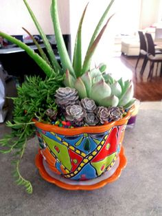 Succulents+in+a+Bright+Mexican+Pottery