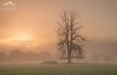 https://flic.kr/p/LSbUBS | The Protector | The Protector   An early morning trip out into the Eden Valley this morning hoping for a wee bit of mist to work with.  As always I am drawn to trees, especially those loners caught in a bit of mist. A really great looking tree this one close to Temple Sowerby near Penrith.  I loved the sheep that were lying beneath its branches, almost under its protection.  Sony A7RII  Sony FE24-70mm f2.8 GM   All rights reserved © Brian Kerr Photography 2016