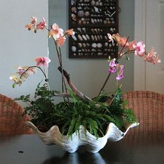 White resin clam shell centrepiece is the perfect prop for your beach-theme. Orchid Planters, Orchid Pot, Orchids Garden, Shell Centerpieces, Centrepieces, Giant Clam Shell, Growing Orchids, Orchid Arrangements, Container Plants