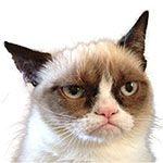 Viral Grumpiness: Grumping with Grumpy Cat