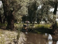 ROMANIA: DANUBE DELTA.  Canoeists navigating the shallow waters of the Danube River delta in Romania. Photographed c1975.