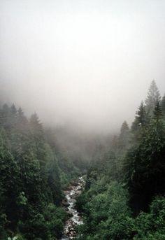 O rio murmura entre as árvores da floresta.