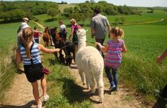 Kindergeburtstag im Alpaka Abenteuerpark auf sunny.at Animals, Amusement Parks, Adventure, Animales, Animaux, Animal, Animais