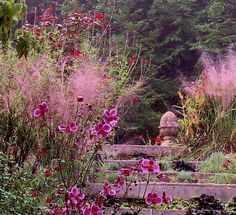 Pink muhly and Japanese anemone - wonderful fall combo in a less common fall color.