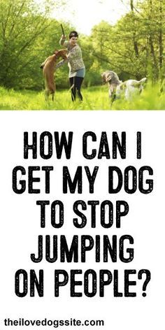 HELP!: How Can I get My Dog To Stop Jumping On People? Getting people to respect that you do not want your dog to jump is the hardest part!