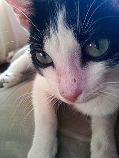 Gatito :) kitty cat