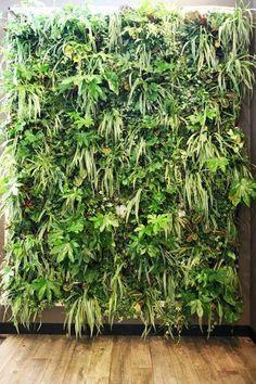 Muur met planten Vertical Gardens, Green Walls, Wall Decor, Herbs, Backyard, Plants, House, Beautiful, Warm Home