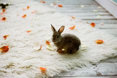 fall rabbit