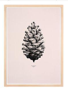 Pine Cone- Dagens Poster | BoligciousBoligcious
