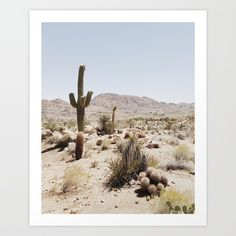 joshua tree, california - Earmark Social Bridgette S. joshua tree, california Travel Guide to Joshua Tree, California Desert Dream, Desert Life, Desert Days, In The Desert, Memorial Day, Road Trip, Adventure Is Out There, The Great Outdoors, Travel Inspiration