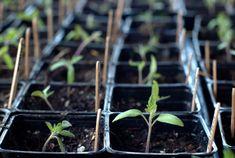 Beginning gardener's vegetable planting chart.