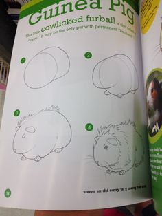 Step by step how to draw a guinea pig