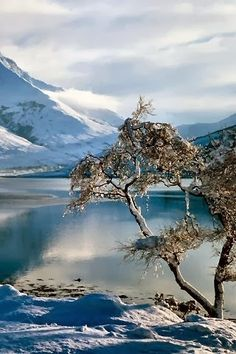 Ice blue water.  Snow covered mountains.  Icicles dripping from trees.  Perfect for a romantic fur rapped stroll.  #Ballachulish, #Scotland