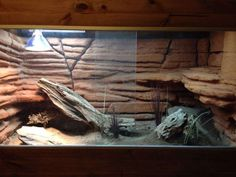 BEARDED DRAGON HABITAT 28