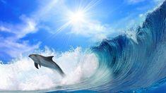 free Sea Waves wallpaper, resolution : 1600 x tags: Sea, Waves, Dolphins. Tier Wallpaper, Ipad Air Wallpaper, Waves Wallpaper, Animal Wallpaper, Wallpaper Backgrounds, Wallpapers, Wallpaper Pictures, Beach Wallpaper, Beautiful Wallpaper