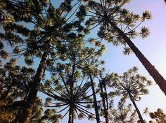 Horto Florestal em Campos do Jordão - São Paulo