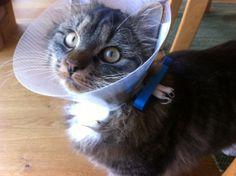 WeLoc bag clip can help your sick cat.