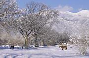Taos January, 2008 by Lynard Stroud