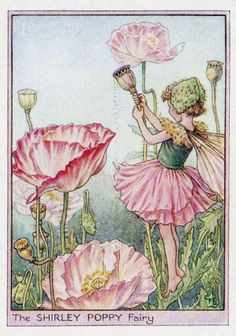 Shirley Poppy Flower Fairy Vintage Print c1950 by TheOldMapShop                                                                                                                                                                                 More