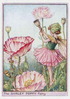 Shirley Poppy Flower Fairy Vintage Print c1950 by TheOldMapShop