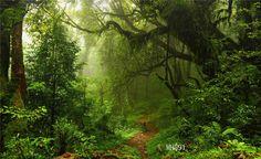 Vinyl Studio Forest Backdrop Photography Prop Photo Background 20x10ft MH591 #UnbrandedGeneric