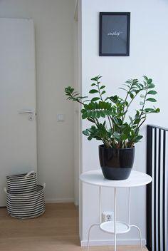 talo markki - green plants in interior
