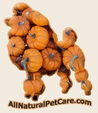 Holistic Dog Food Recipe – Healthy Digestion Pumpkin Meatloaf