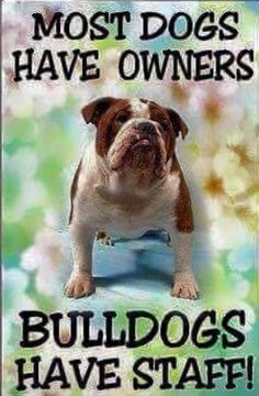 ❤ Understood from the moment the first paw touched the carpet - WHO was going to be in charge LOL and who would want it any other way. ❤  Posted on Bulldog Pics 2.0