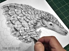 Pangolin Progress Pic #3. Drawing with a Tombow Zoom L105, Ballpoint Pen