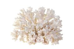 Coral stock photos and royalty-free images, vectors and illustrations