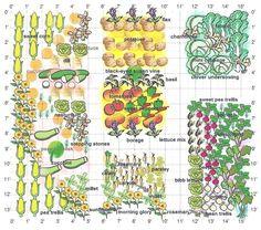 Výsledok vyhľadávania obrázkov pre dopyt companion plant for kale
