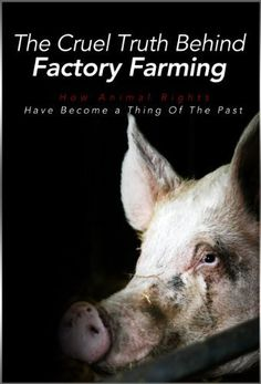 The Cruel Truth Behind Factory Farming: How Animal Rights Have Become A Thing Of The Past (What the News Won't Tell You: Secrets and Conspiracies Book 2) by Alex Morello, http://www.amazon.com/dp/B00JNFG0QG/ref=cm_sw_r_pi_dp_5majub16W5HTV