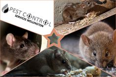 """We """"Pest Control Services Wellington"""", are wishing a very happy new year to all of you. # Best Picture For Rodents logo For Your Taste You are looking for someth Types Of Bugs, Types Of Insects, Bees And Wasps, Pest Control Services, Humming Bird Feeders, Garden Guide, Natural Garden, Shade Plants, Rodents"""