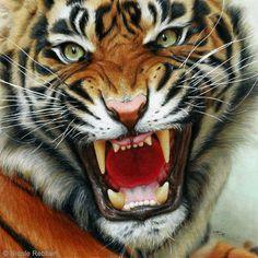 Tiger (drawing) by Quelchii.deviantart.com on @DeviantArt