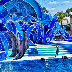 Sea World, San Diego. Amazing shows!  <3