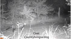 Tuesday Trailcam-Takes January 29 - See what I found this week!