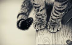 The 20 Cutest Pictures Of Cat's Paws
