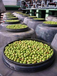 シークレットスペインの画像|エキサイトブログ (blog) Olive Oil, Beans, Fruit, Vegetables, Food, Essen, Vegetable Recipes, Meals, Yemek