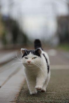 Cute kitten felted... strolling...!