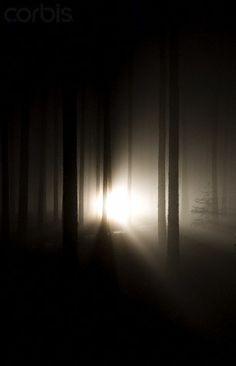 Headlights through foggy forest